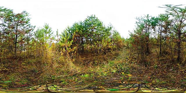 молодой хвойный лес