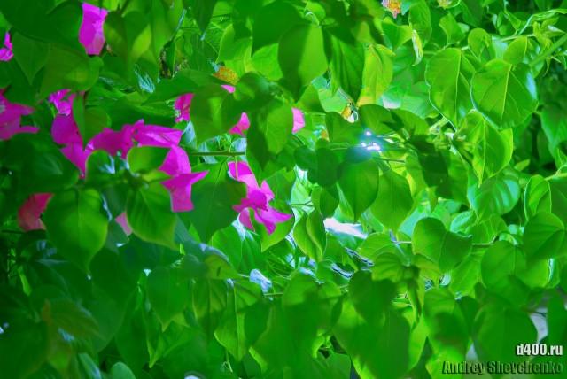 Golden 5 Flora