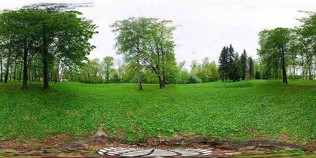 сферическая панорама на пеньке