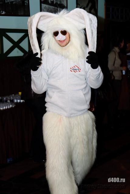 заяц. просто заяц