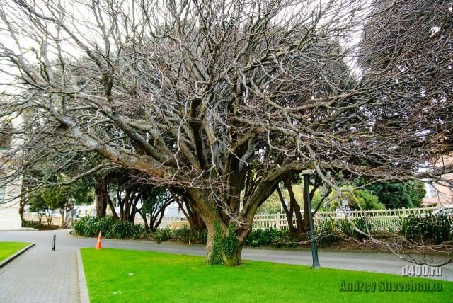 New Zealand trip. Wellington (19)